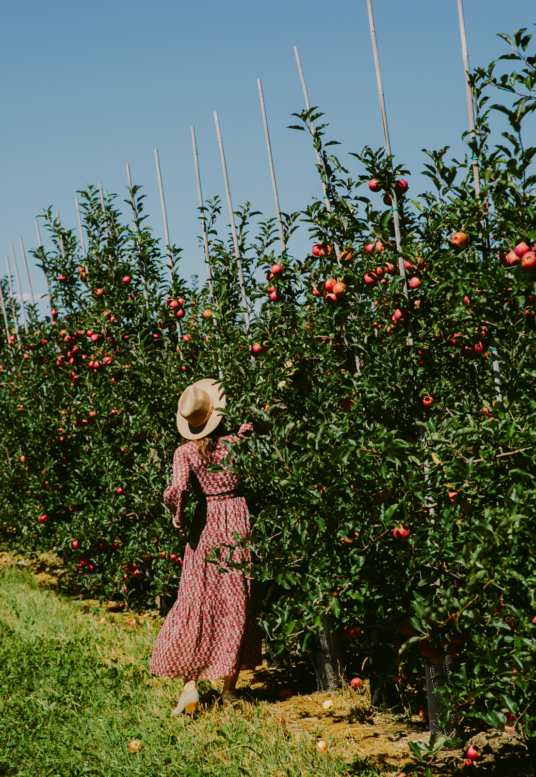 love-taza-apple-picking995hh-36